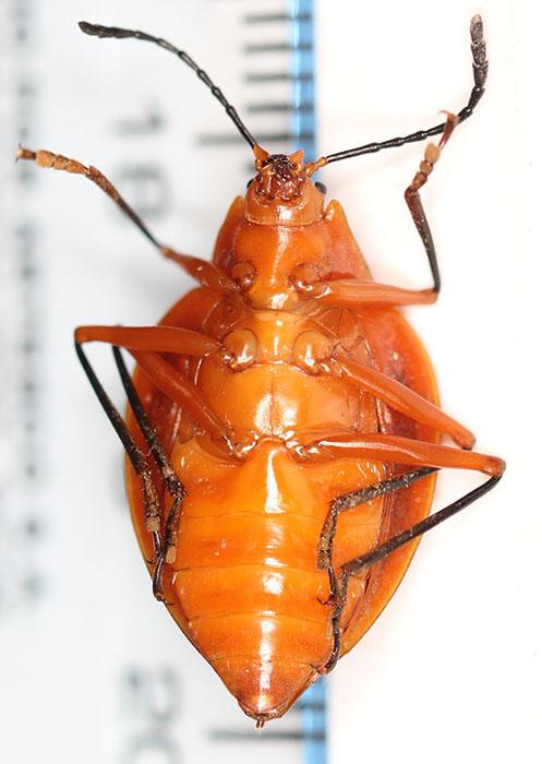 Zoologie de tenă Cremă pentru îndepărtarea papilomelor de pe gât